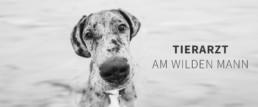 fotograf-dresden-businessfotograf-tierarzt-hund-thumbnail
